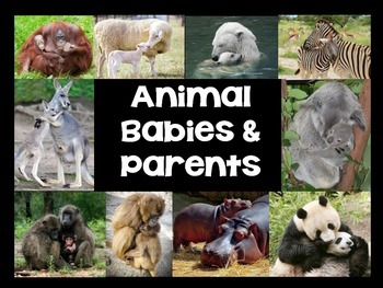 Animal Babies & Parents First Grade Science Nonfiction