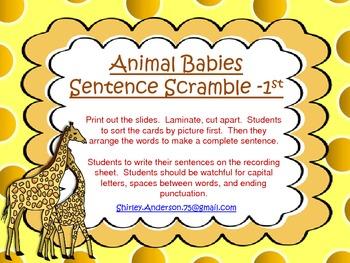 Animal Babies- Sentence Scramble for 1st grade (Nonfiction