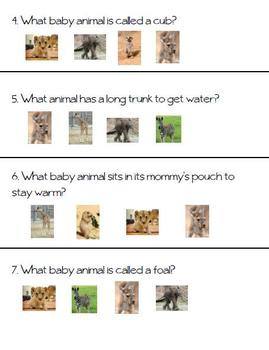 Animal Babies Test--Kindergarten Reading Street Unit 2 Week 3