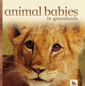 Animal Babies in Grasslands Amazing Words PPT