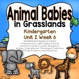 Animal Babies in Grasslands Kindergarten Reading Street Unit 2 Week 3