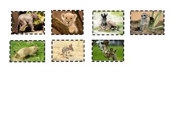 """Animal Babies in Grasslands"" Reading Street Kindergarten, Unit 2 activity"