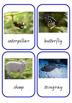 Animal Baby Matching Cards