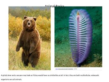Animal Basics - Eating, Backbone, Symmetry, and Dichotomous Keys