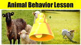 Animal Behavior No Prep Lesson w/ Power Point, Worksheet a