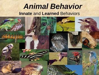 Animal Behavior PowerPoint