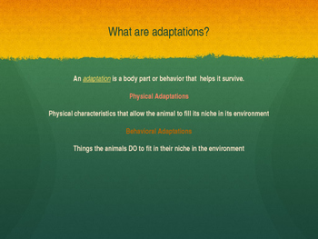 Animal Behavior and Adaptations