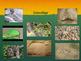 Animal Behavior and Adaptations