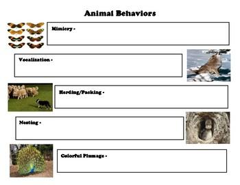 Animal Behaviors