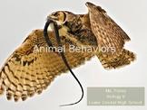 Animal Behaviors Slideshow