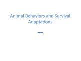 Animal Behaviors and Adaptations PowerPoint