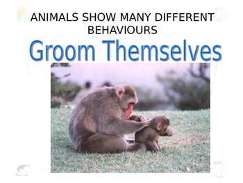 Animal Behaviour Powerpoint Presentation - Senior Biology