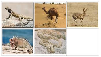 Animal Biome Sorting