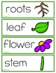 Animals, Living and Nonliving Things Vocabulary