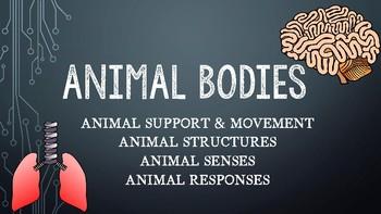 Animal Bodies Presentation