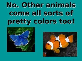 Animal Body Coverings