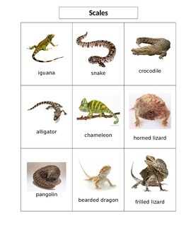Animal Body Coverings Card Sort