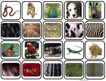 """""""Animal Body Coverings"""" Match & Sort for Autism"""