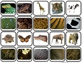 """Animal Body Coverings"" Match & Sort for Autism"