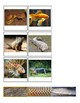 Animal Body Coverings Classification