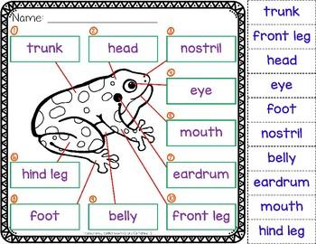 Animal Body Parts Worksheets