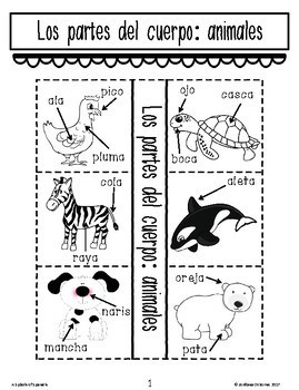 Animal Body Parts Interactive Notebook in Spanish
