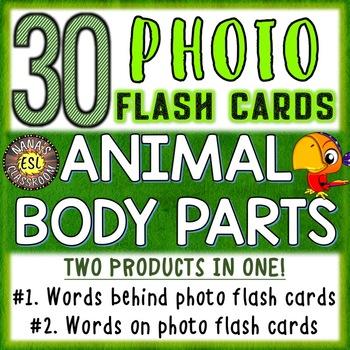Animal Body Parts Photo Flash Cards