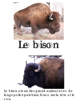 Animal Book -Bison