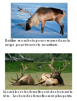 Animal Book - Caribou