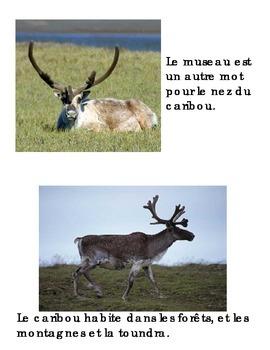 Animal Book - Caribou