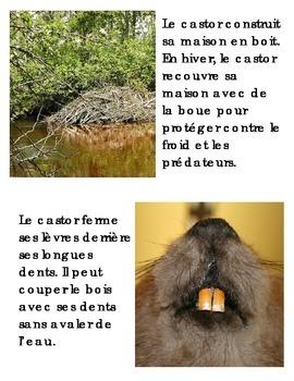 Animal Book -- Castor