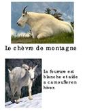 Animal Book - Chevre de montagne