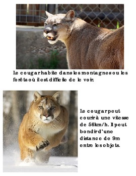 Animal Book -- Cougar