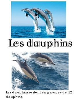 Animal Book -- Dauphin