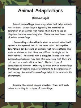 Animal Adaptations: Camouflage