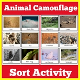 Animal Camouflage Activity Sort