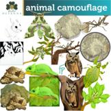 Animal Camouflage Clip Art