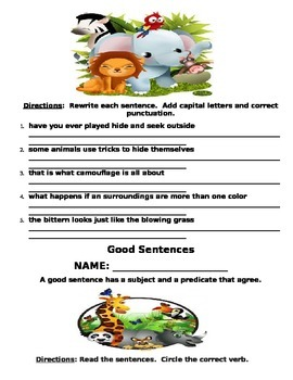 Animal Camouflage Grammar Packet (Common Core Aligned)
