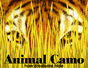 Animal Camouflage: How Creatures Hide