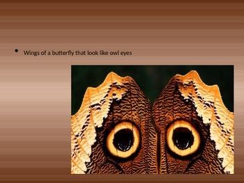 Animal Camouflage PowerPoint Presentation