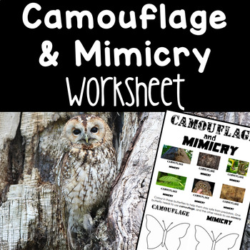 Camouflage And Mimicry Worksheets & Teaching Resources | TpT