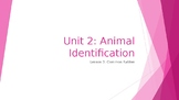 Animal Care Assistant - Animal Identification - Common Ratities