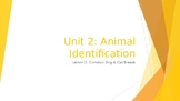 Animal Care Assistant - Animal Identification - Dogs & Cats