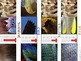 Animal Classification. Mammal, Fish, Reptile, Bird. Photos, Labels and Sorts.