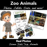 Animal Classification. Mammal, Fish, Reptile, Bird. Photos