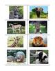 Animal Categorizing: Ocean Animals, Zoo Animals and Farm Animals