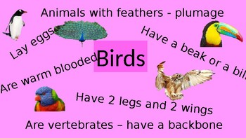 Animal Category Posters - Information Reports - Animals