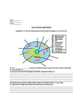 Animal Cell Assessment