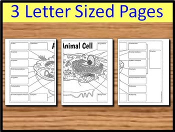 Animal Cell - Big Foldable for Interactive Notebook or Binder