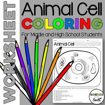 Animal Cell Coloring Worksheet for Middle and High School Students